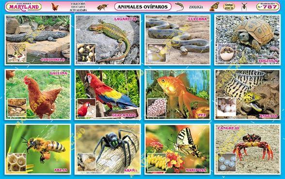 imagenes Animales Ovíparos