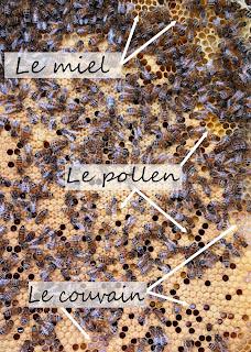 miel pollen et couvain