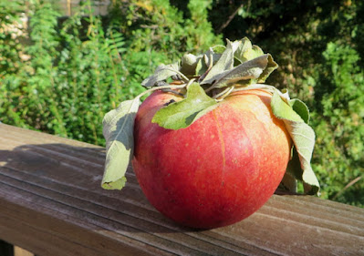 A striped orange-red apple with a crown of leaves