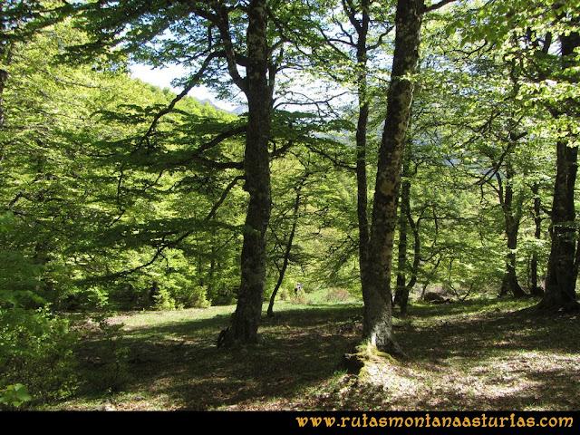 Transcantábrica Tarna-Ponga: Cruzando bosque