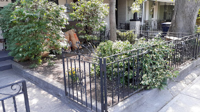 Beaconsfield Village Toronto front yard summer garden cleanup after by Paul Jung Gardening Services--a Toronto Organic Gardener