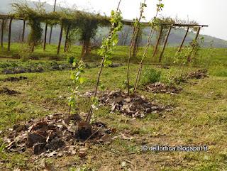 ribes dell orto della fattoria didattica a Savigno Valsamoggia Bologna
