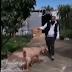 Κορινθία: Έβγαλε βόλτα την κατσίκα του και έγινε viral!