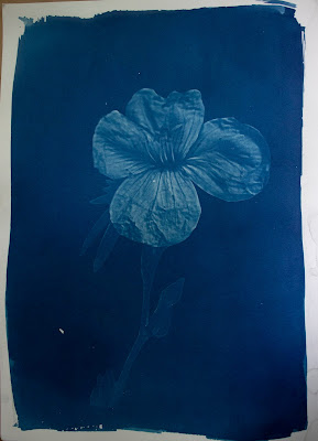A cyanotype image of a wildflower and a blurb about obsolete words.