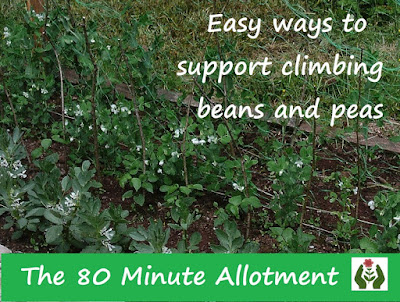 Easy wasy to support climbing beans and peas 80 Minute Allotment Green Fingered Blog