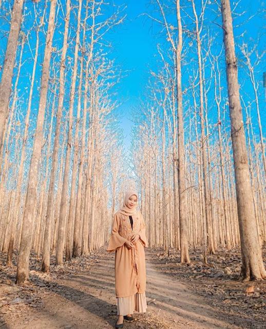 Hutan kayu jati