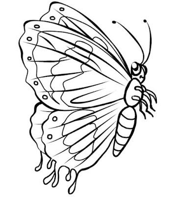 Gambar mewarnai kupu kupu cantik