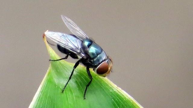 3 Kontribusi Penting dari Lalat untuk Manusia