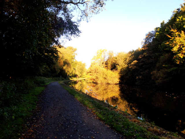 Looking back along the towpath.  The leaves on the trees are golden and the canal reflects them and the blue sky