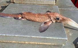 Nelayan Kaget Tangkap Ikan Monster Misterius ini