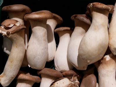 Mushroom Contract Farming in Osmanabad
