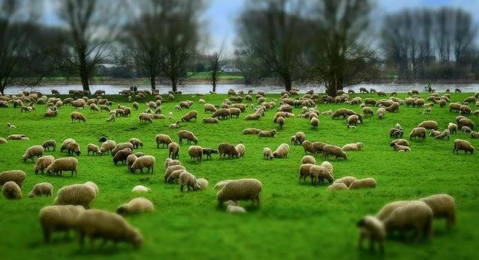 Συνάντηση με τον Μάκη Βορίδη ζητούν οι Θεσσαλοί κτηνοτρόφοι