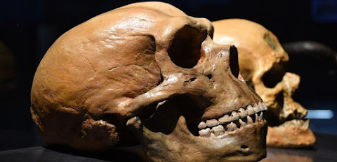 Modern humans, Neanderthals share a tangled genetic history, study affirms