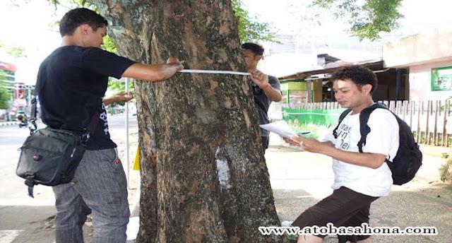 Pengertian Pohon, Ciri-Ciri dan Klasifikasi Pohon