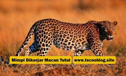 Ramalan Angka Dari Mimpi Dikejar - Kejar Macan Tutul