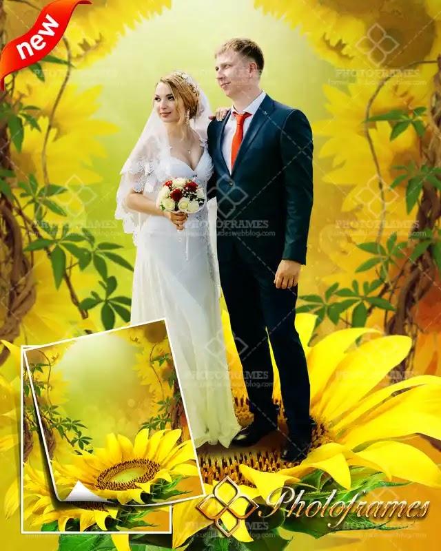 Fondo de girasoles color amarillo para fotos