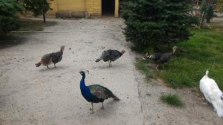 Краматорск. Парк птиц
