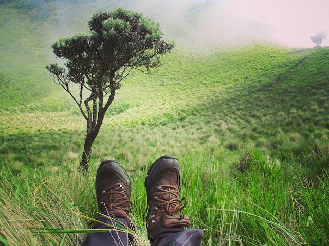 Padang Savana di Gunung Merbabu, Jawa Tengah