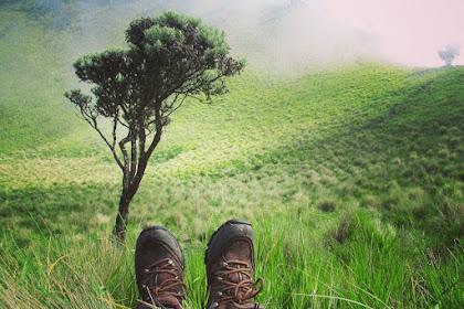14 Objek Wisata Alam Padang Savana Rumput di Indonesia