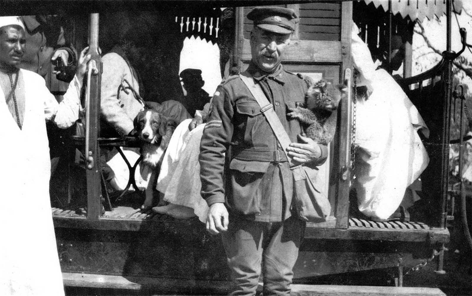 A corporal, probably on the staff of the 2nd Australian general hospital, holds a koala, a pet or mascot in Cairo, in 1915.