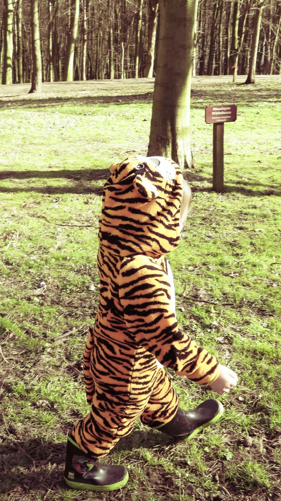 Tiger goes for a walk