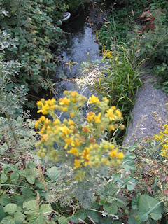 Yellow flowers and blackberry bushes with a blue stream in the background.
