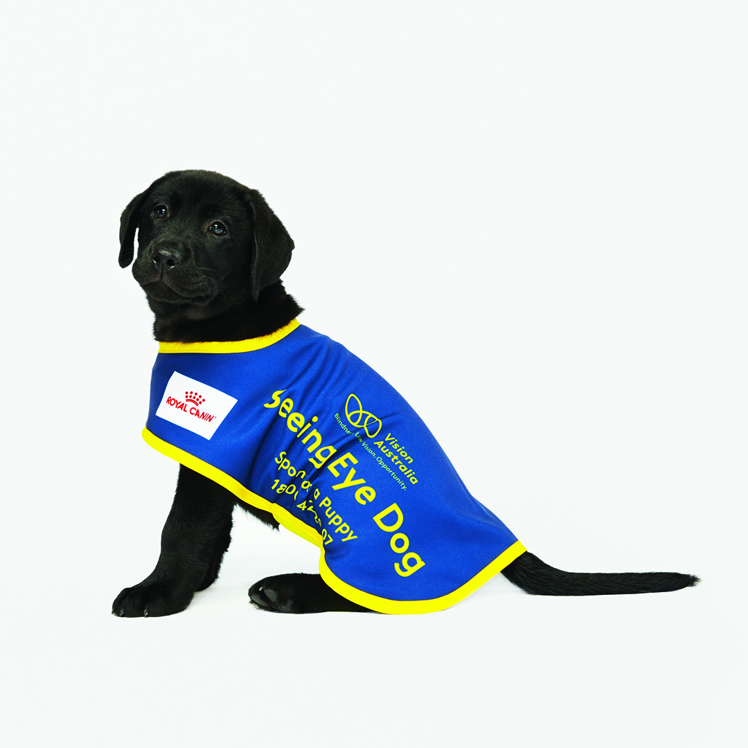It Costs A Minimum Of 50 000 And Takes Up To Two Years Train One Seeing Eye Dog Training Begins When The Is Still Puppy Involves Teaching