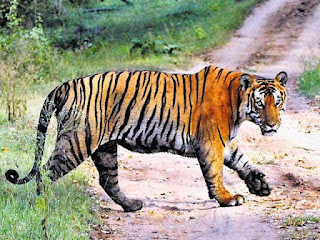 5th Tiger Reserve to be Setup in Tamil Nadu