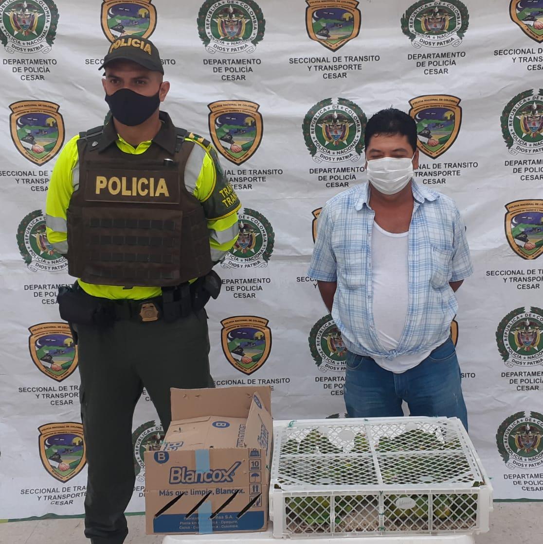 hoyennoticia.com, Lo cogieron con 90 pericos reales en Aguachica