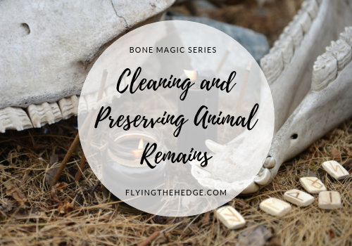 Bone Magic Series: Cleaning and Preserving Animal Remains