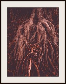 plakat, plakat drzewo, plakat z drzewem, plakat z korzeniami, plakat brązowy, plakat darkmood, plakat przyrodniczy, plakat leśny, plakat z lasem, plakat A3, plakat A3 pionowy