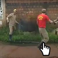 https://www.insoonia.com/quando-o-doguinho-dificulta-o-trabalho-dos-bombeiros/