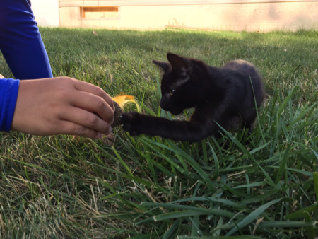 kitten playing with feather
