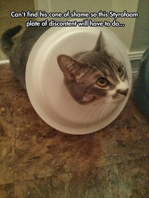 38 Funny Memes and Random Pics to Destroy Your Down Time #FunnyMemes #Memes