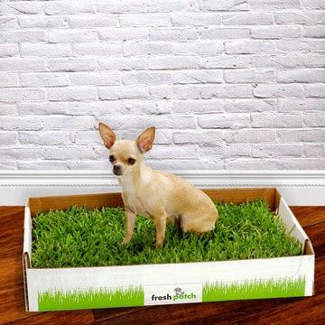 cachorro na caixa de grama