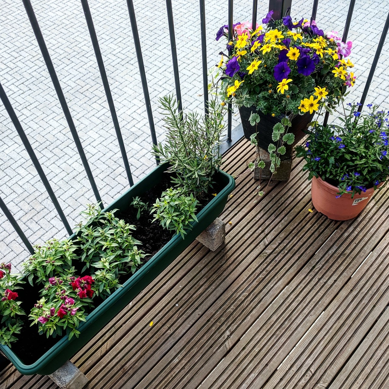 Balcony Garden Tips