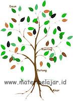 #6 Organ Pokok Tumbuhan Dan Fungsinya