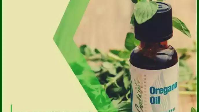 Cele mai puternice antibiotice naturale: Echinaceea, Argintul coloidal, Uleiul de Oregano, Mierea de albine, mierea de Manuka,