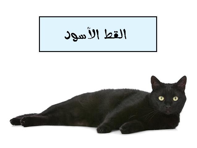 قصة القط الأسود