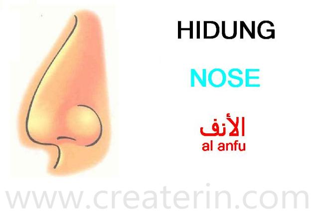 My Blog Createrin Mengenalkan Anggota Tubuh Hidung Nose Al Anfu Bahasa Indonesia Inggris Arab