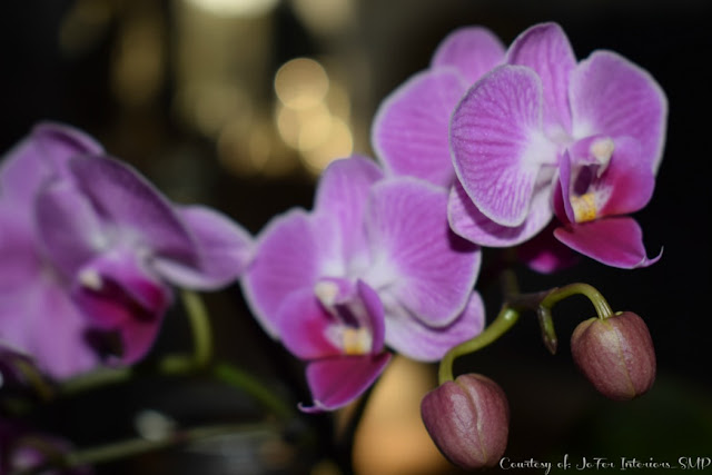 A Real Orchid taken with close up shot in Low lighting and flash enabled