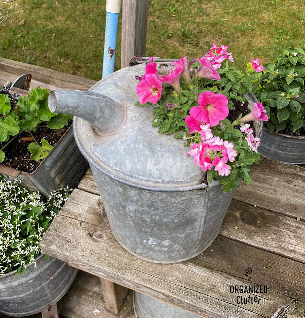 Photo of a galvanized bucket with spout planted with annuals