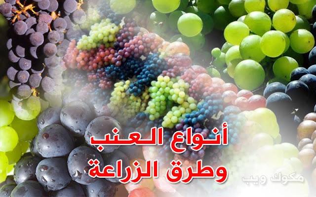 انواع العنب وطريقة زراعته
