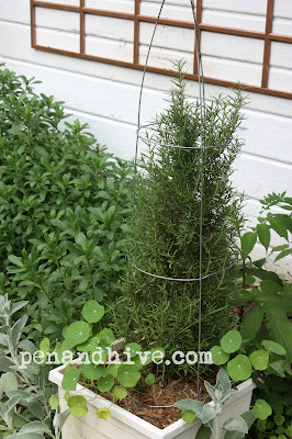 inverted tomato cage topiary