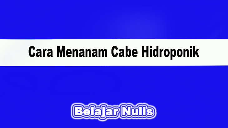 Cara Menanam Cabe Hidroponik