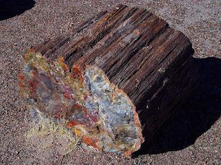 tronco de madeira petrificada