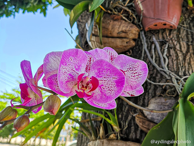 Orchids on Trees II