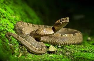 Snake dream meaning, snake in dream