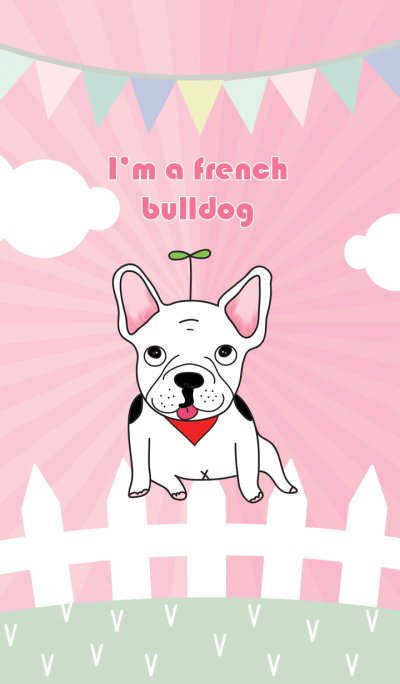 I'm a French bulldog