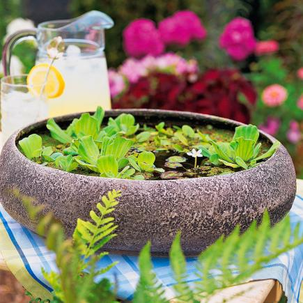 Easy Container Water Gardens